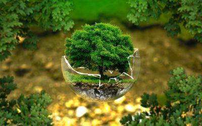 Duurzaam ondernemen? Begin met afval!