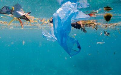 Wereld Oceaan Dag. Waarom plastic recycling cruciaal is